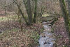 Rundlauf-Kleinostheimer-Wald-10