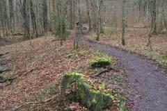Rundlauf-Kleinostheimer-Wald-11