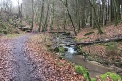 Rundlauf-Kleinostheimer-Wald-13