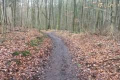 Rundlauf-Kleinostheimer-Wald-2