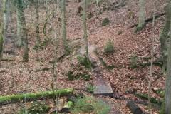 Rundlauf-Kleinostheimer-Wald-23