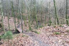 Rundlauf-Kleinostheimer-Wald-24