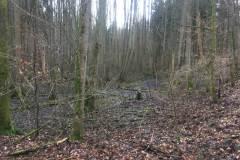 Rundlauf-Kleinostheimer-Wald-3