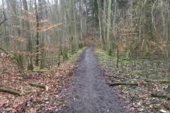 Rundlauf-Kleinostheimer-Wald-4