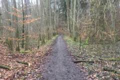 Rundlauf-Kleinostheimer-Wald-5