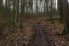 Rundlauf-Kleinostheimer-Wald-6