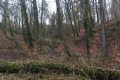 Rundlauf-Kleinostheimer-Wald-9