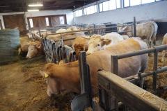 Im Winter finden die Rinder Platz im Tretmist-Stall
