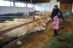 Kühe Füttern mit aromatischen Heu