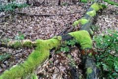 Waldbehung-mit-Niklas-2021-10