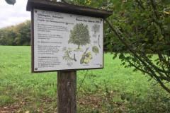 Baumlehrpfad-Holzapfel