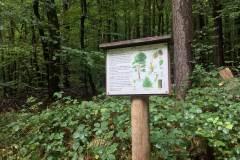 Baumlehrpfad-Kiefer