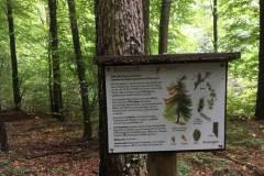Baumlehrpfad-Laerche-2
