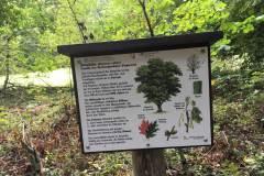Baumlehrpfad-Roteiche