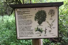 Baumlehrpfad-Schlehe