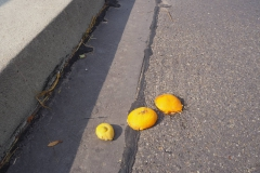 Regelmäßig Orangenschalen auf der Hörsteiner Brücke