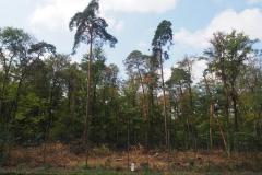 Flora- und Fauna Habitat in Hanau (FFH-Wald)