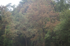 vertrocknete Blätter schon Anfang August
