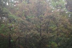 Hanauer Forst