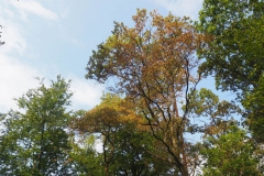 leider oft zu sehen: vertrocknete Blätter